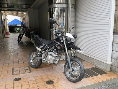 d-tora_800.jpg
