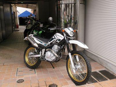 serow250.JPG